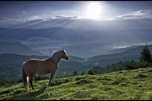 cavallo-e-luce-
